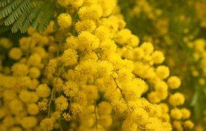 flower-3123134__340